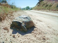 Черепаха №2